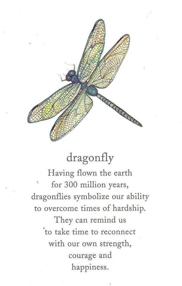 DragonFly Porto